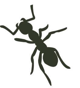 ant-3