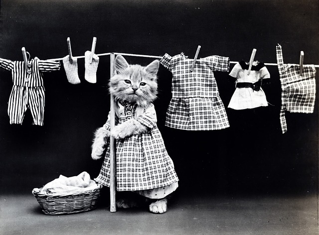 Kitten washing clothes