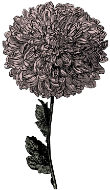 victorian-flower-clipart-3 copy
