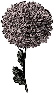 victorian-flower-clipart-3 copy