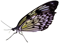 """image by <a href=""""http://www.freeimageslive.co.uk/free_stock_image/exotic-butterfly-white-jpg"""" target=""""_blank""""> freeimageslive.co.uk - BrianNorcross</a>"""