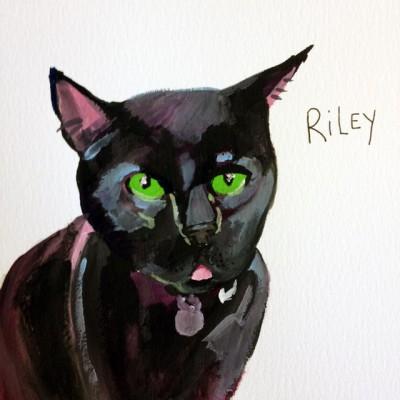 CATS by Alli Katz