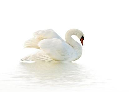 things that cannot die-swan