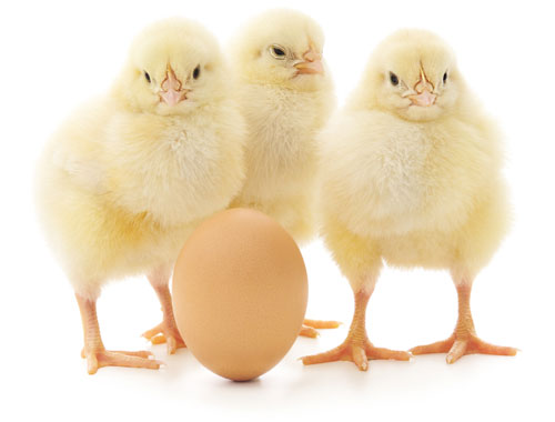 Issue-9-cover-chicks-500-px-cropped