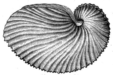 nautilus-shell-gutenberg