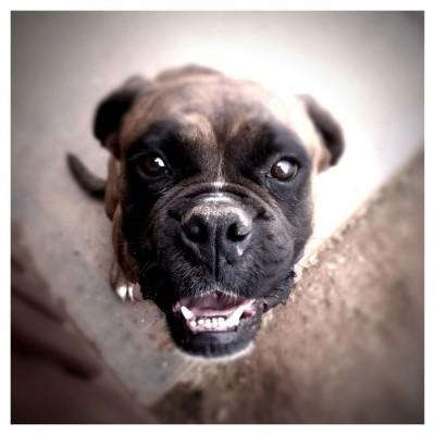 DOG MEMORIES by Doug Ramspeck