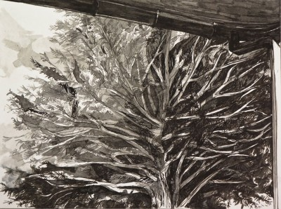 """White Pine,"" pen and ink, 6""x9"", 2015"
