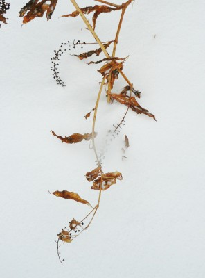 POKEWEED by Lynn Levin