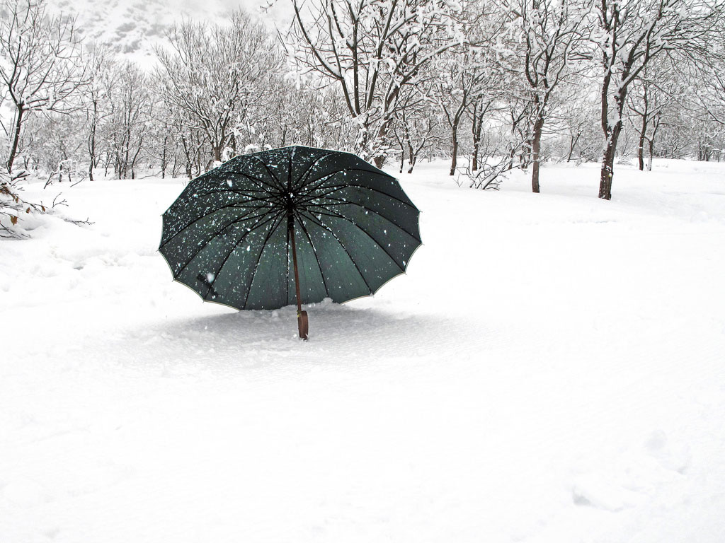 Snowy forest with black umbrella on ground