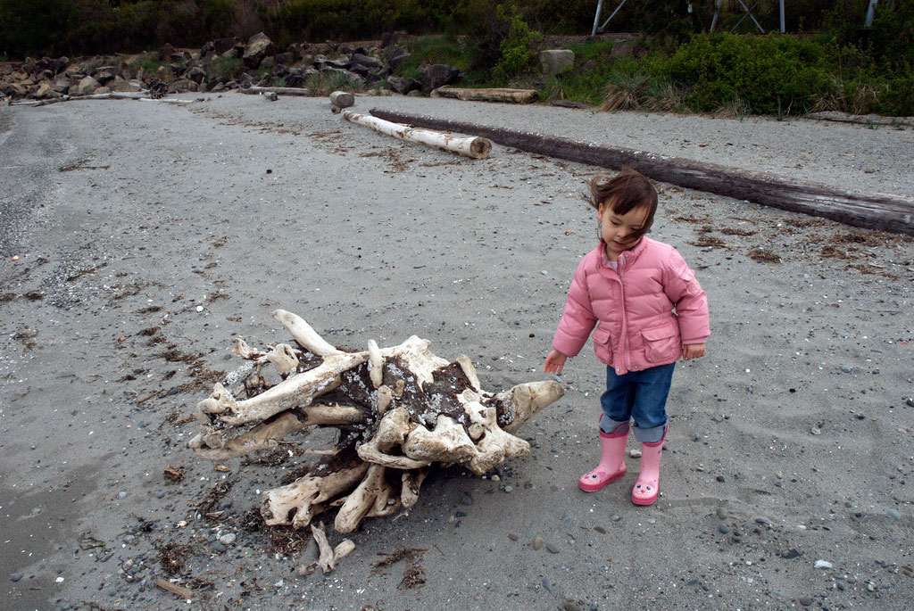 Child standing next to driftwood on a beach