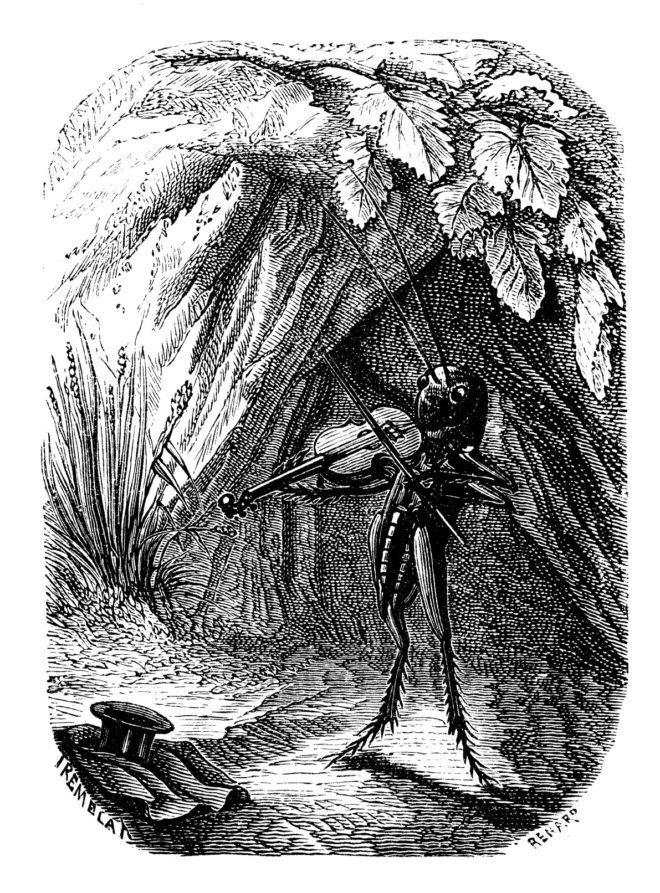 Engraving of cricket with fiddle