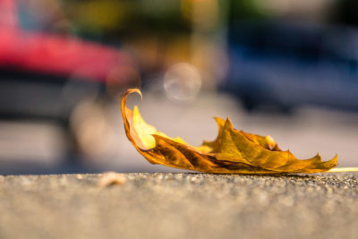 THE COLOR YELLOW, LOVE, THE FALL OF LEAVES IN AUTUMN by Roy Bentley