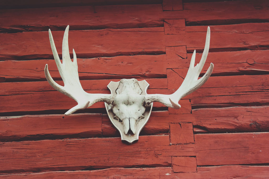 Skull of an animal hanging on a wall of red logs
