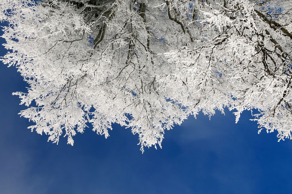 Upside-down image of tree branches covered in snow