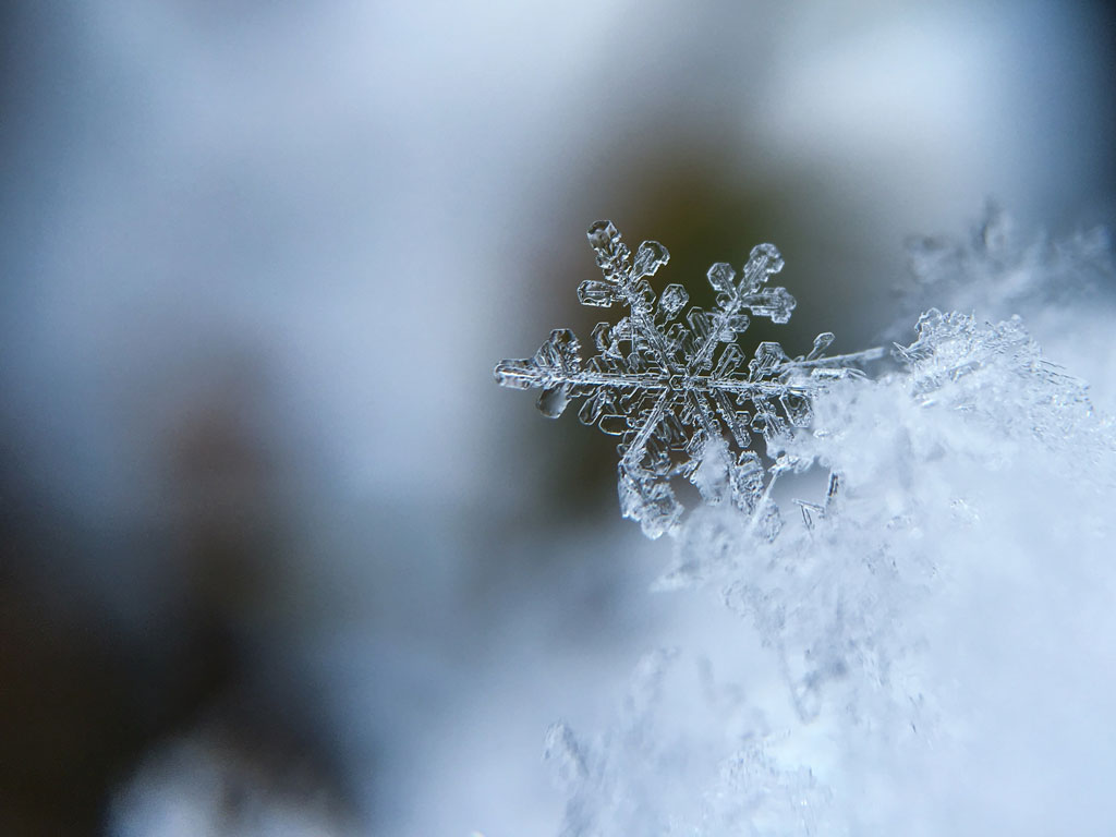 Close-up of a snowflake