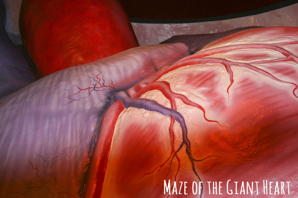 "Drawing of organs and blood vessels with caption ""Maze of the giant heart"""