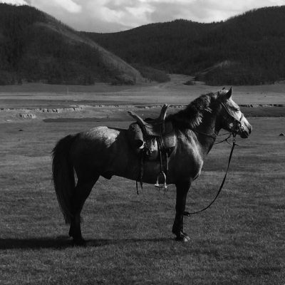 YOUNG WARRIOR ON HORSEBACK, a poem by Kaitlin LaMoine Martin, featured on Life As Activism
