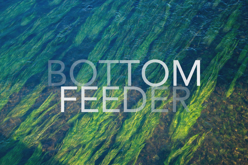"Green hills with caption ""Bottom Feeder"""