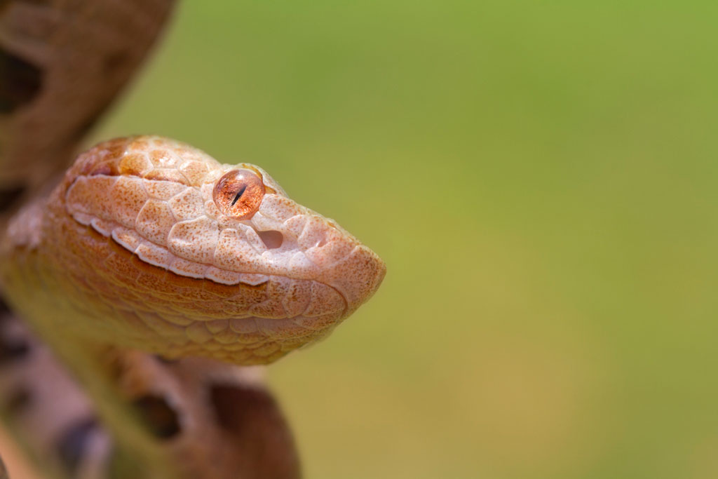 Close-up of a brown, orange, yellow, and white snake's head