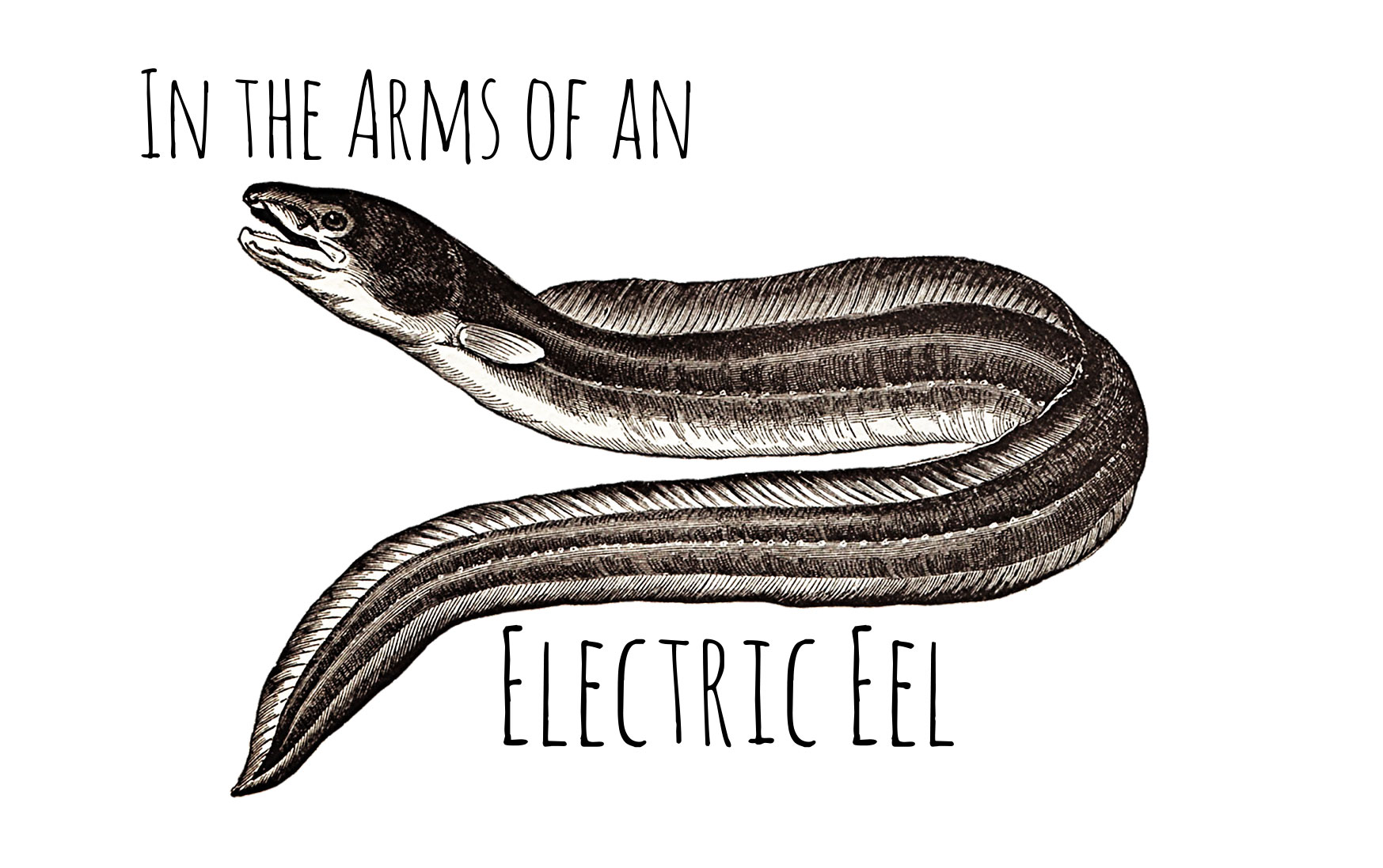 "Vintage etching of an electric eel with title ""In the arms of an electric eel"""