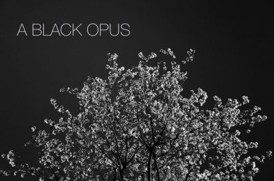 A BLACK OPUS by Penney Knightly