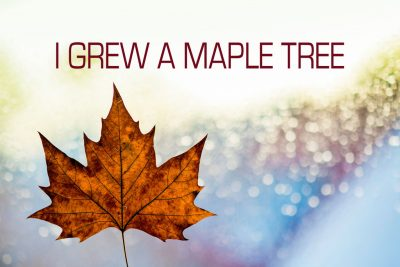 I GREW A MAPLE TREE by Christopher Rodrigues