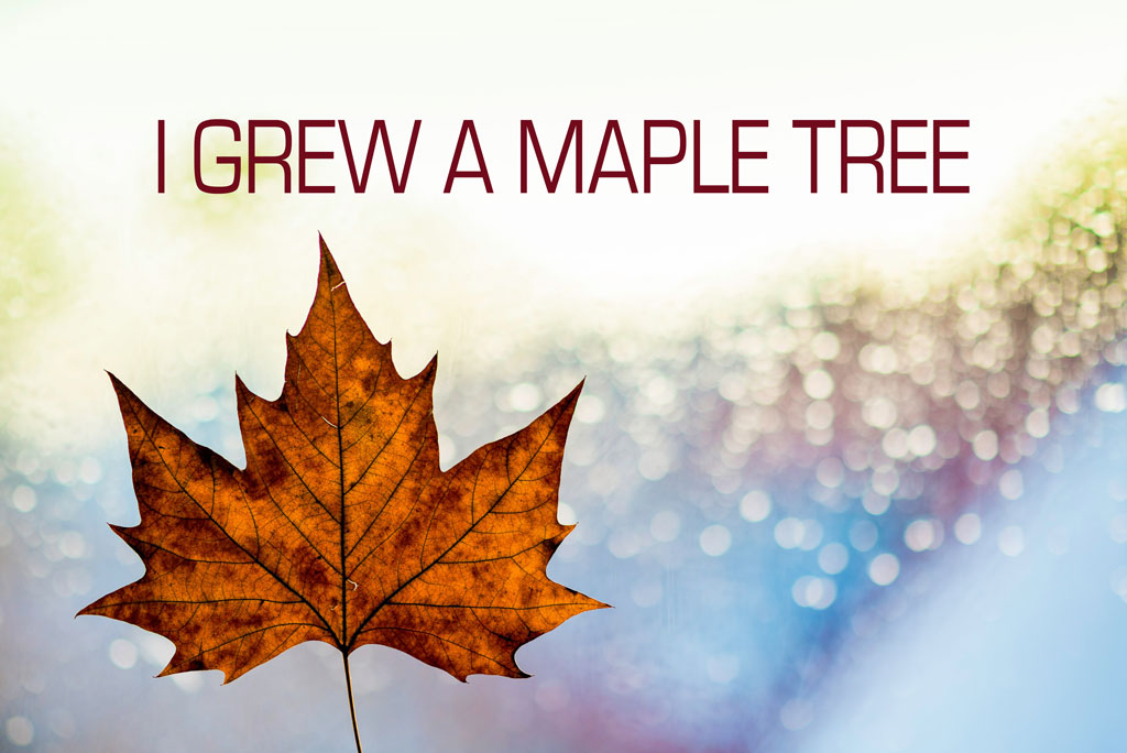 """Maple leaf with colorful background and title """"I Grew a Maple Tree"""""""