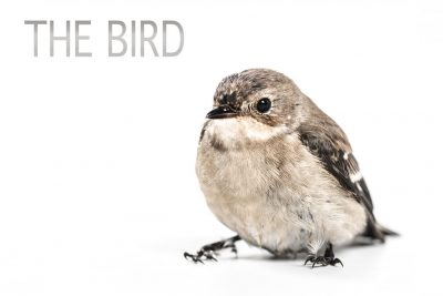 THE BIRD by Cary J. Snider