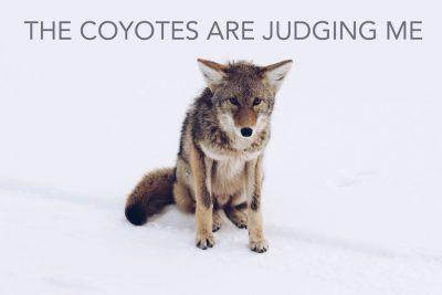 [THE COYOTES ARE JUDGING ME] by Nina Murray
