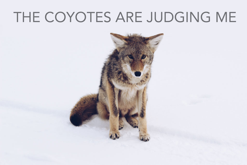 Small coyote standing in snow, with the title of the piece at the top of the image