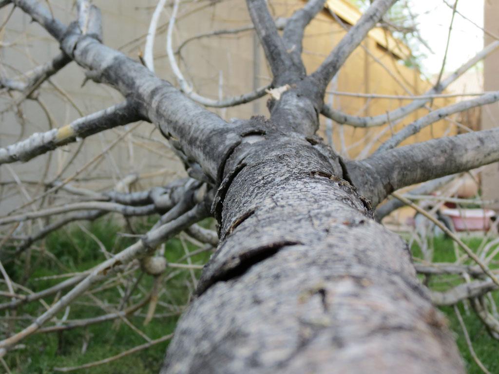 A dead fallen tree