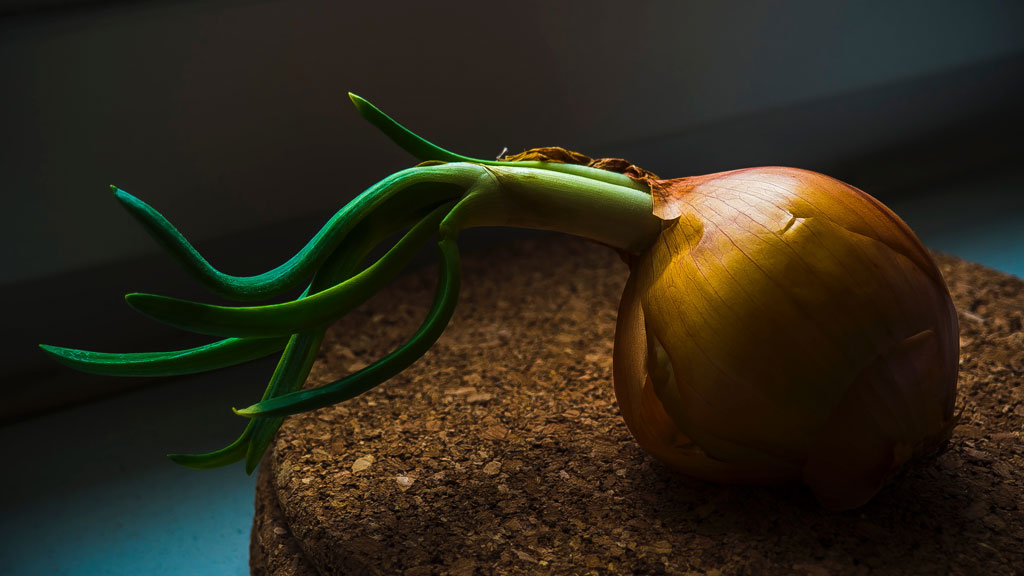 Onion with green stem on cork table