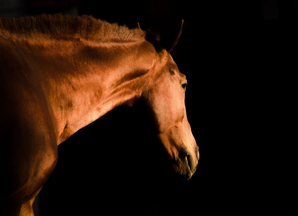 Profile shot of a golden brown horse in harsh lighting