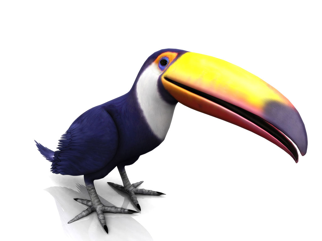 Toucan against white background