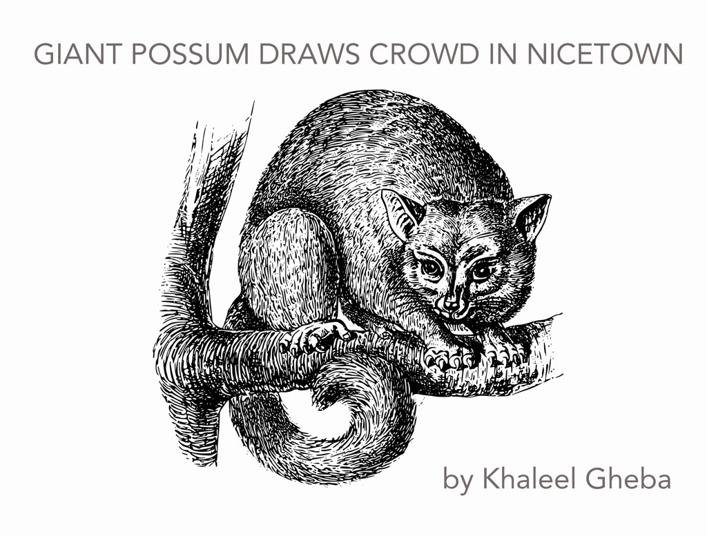 Black and white engraving of possum with title and author