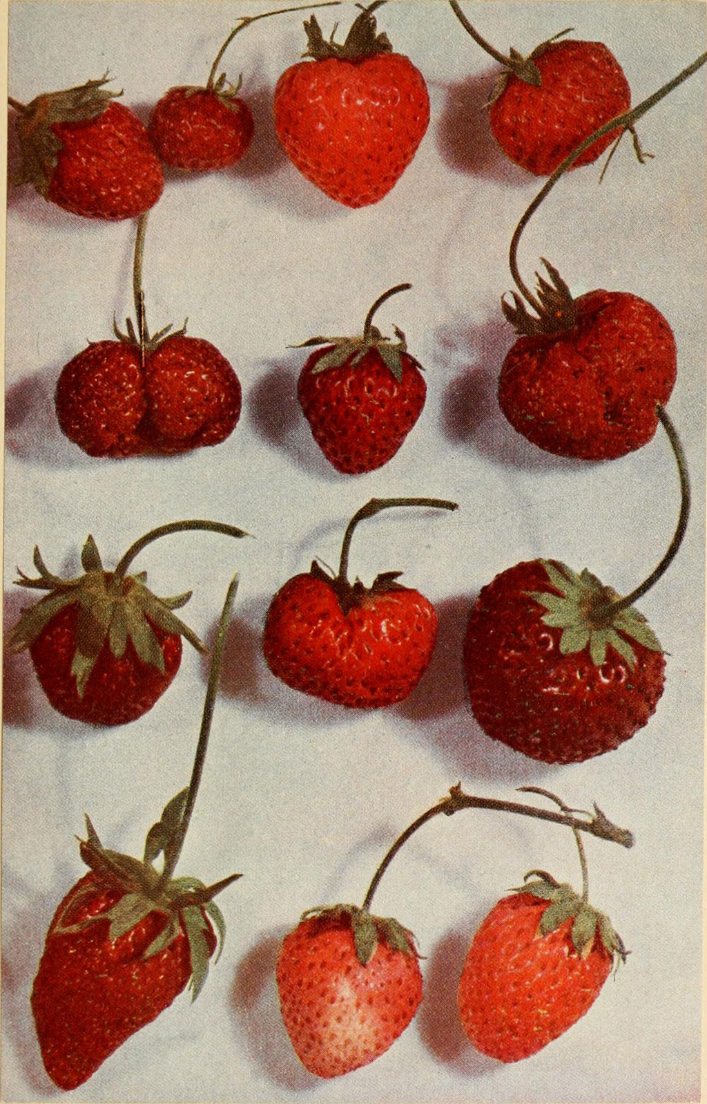 Image of strawberries from Luther Burbank