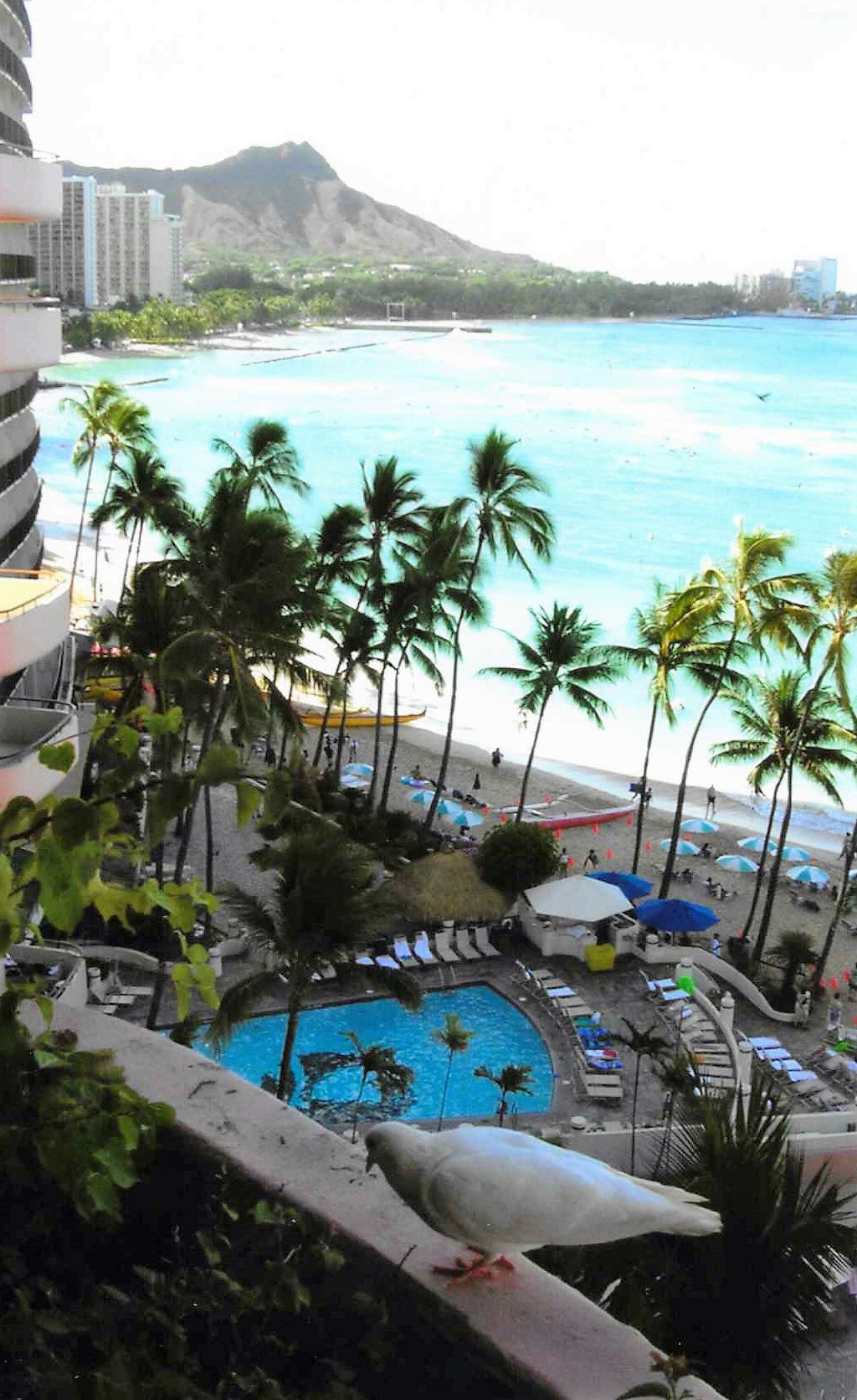 View of ocean, beach, palm trees in Waikiki from a high balcony. In foreground, a pigeon