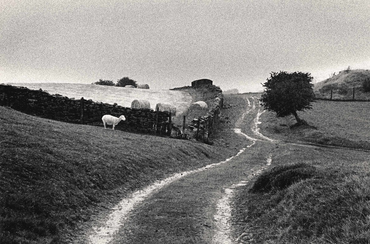 Black-and-white farmland with sheep and trees