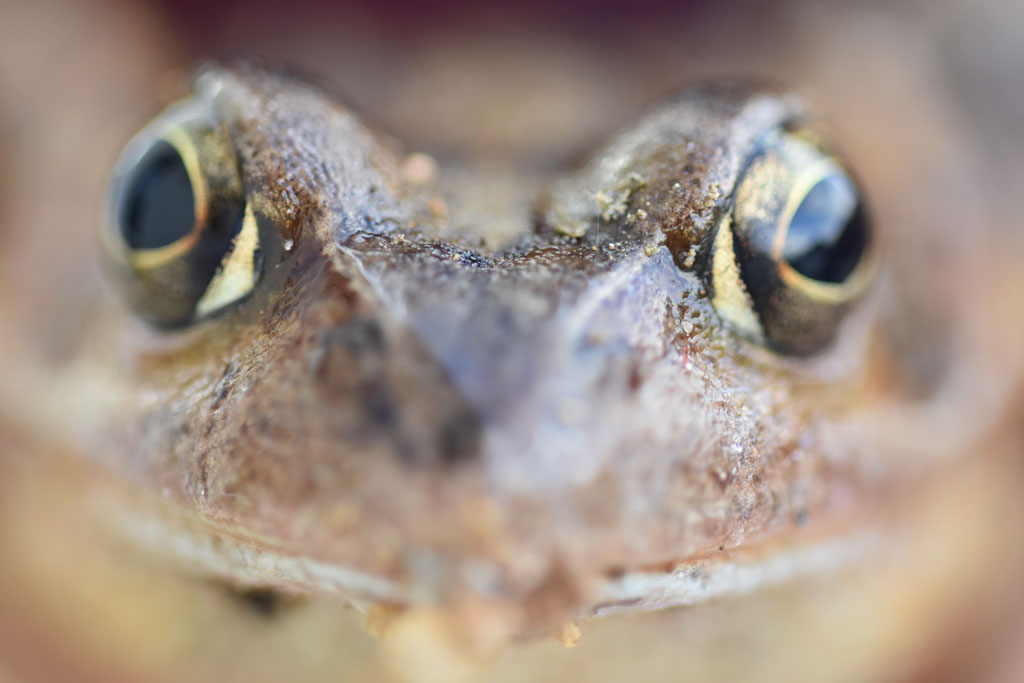 Close up of a toad's face