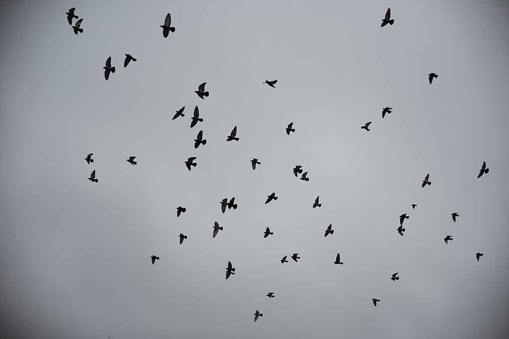 birds flying overhead