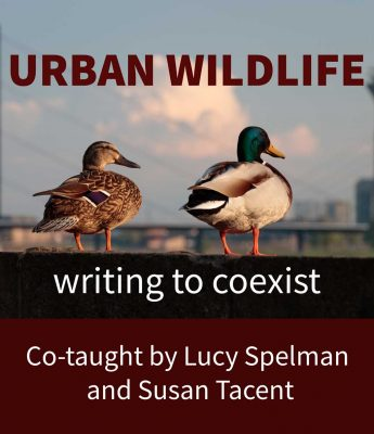 URBAN WILDLIFE: WRITING ABOUT THE ENVIRONMENT, Co-taught by Lucy Spelman and Susan Tacent | September 12 to October 3, 2020  [SOLD OUT]