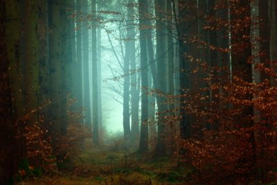 A forest in foggy light