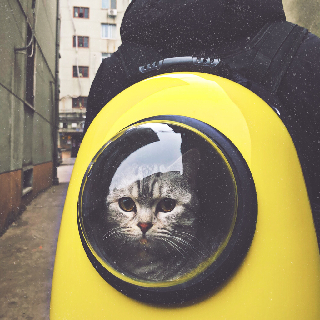 Cat looking out of a jetpack